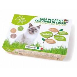 Erba per gatti con fibra di cocco 100gr