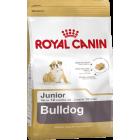 BHN Engl. Bulldog Junior 3kg