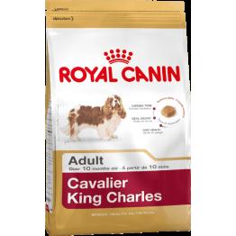 BHN Cavalier King Charles 1.5kg
