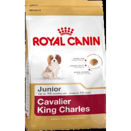 BHN Cavalier K.C. Junior 1.5kg