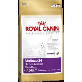 BHN Maltese 1.5kg