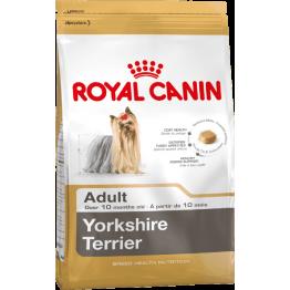 BHN Yorkshire Terrier 1.5kg