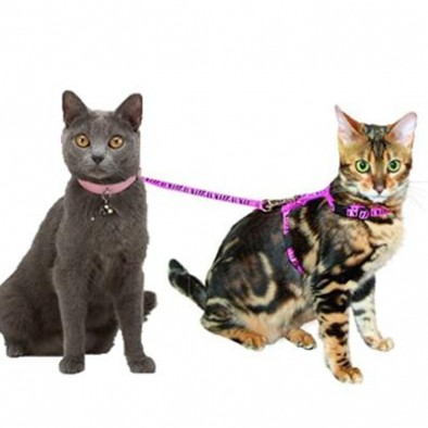 LEASHES COLLARS HARNESSES