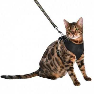 LEASHES HARNESS