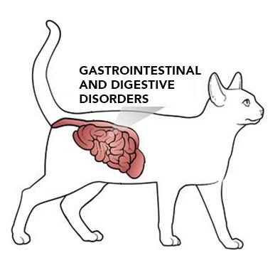DISTURBI GASTROINTESTINALI