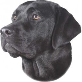 Labrador noir, 2 autocollants