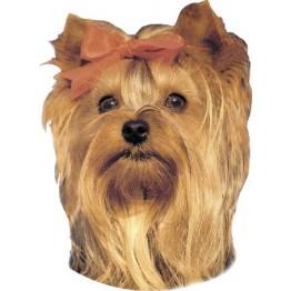 Yorkshire-Terrier, 2 autocollants