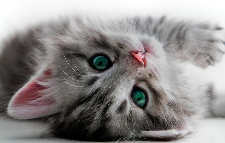 Ai gatti i topi non piacciono poi così tanto